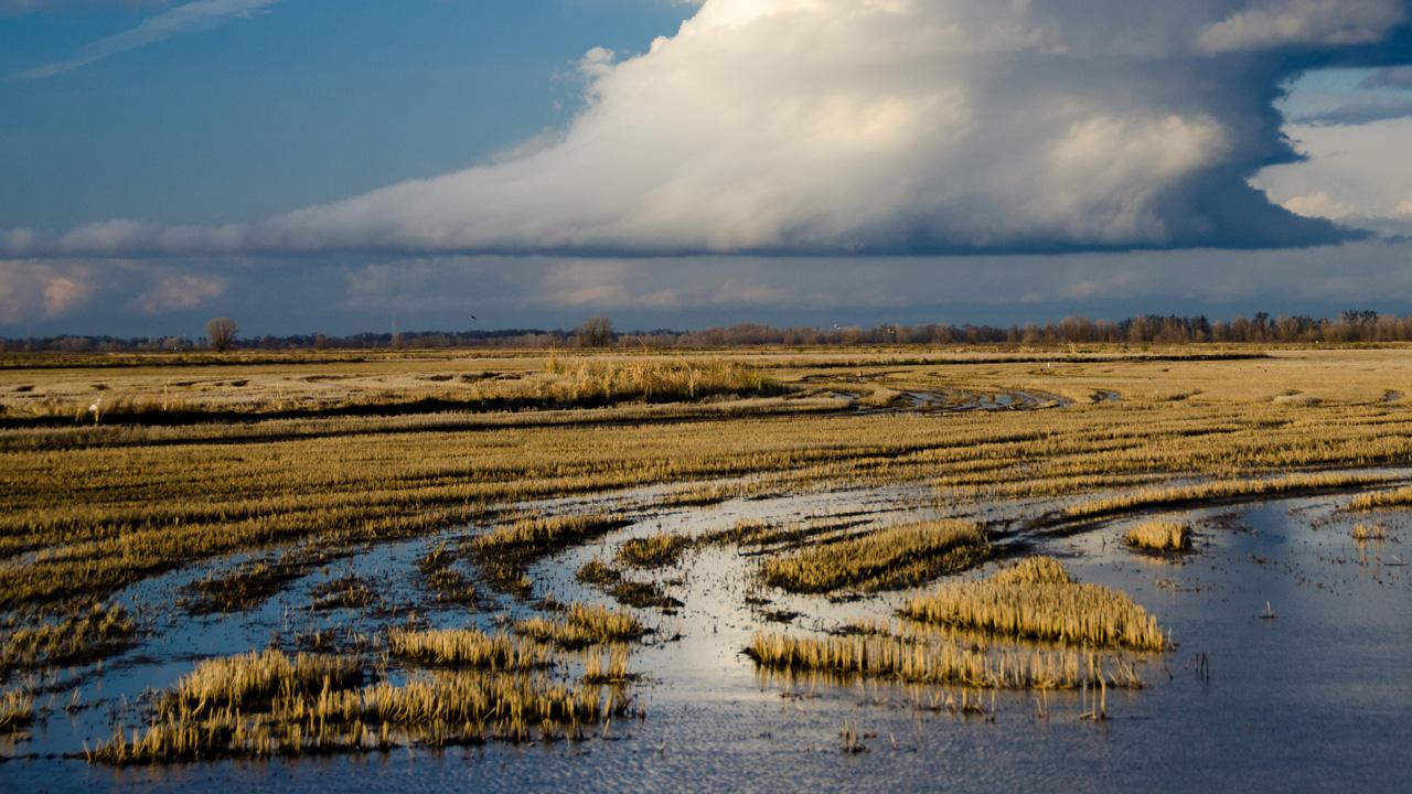 Wetland and rain cloud in the distance display how UC Davis global water crisis research.