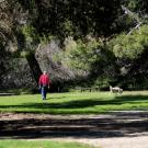 Person playing with dog in park