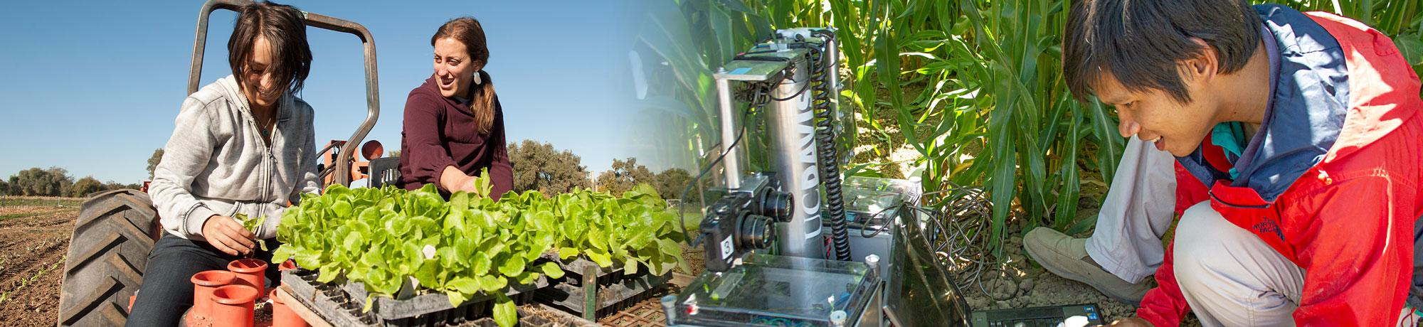 The new Agricultural Technology program of UC Davis Smart Farm will prepare students for the new farming technology and smart farming practices for the future of food and teach sustainable agriculture methods.
