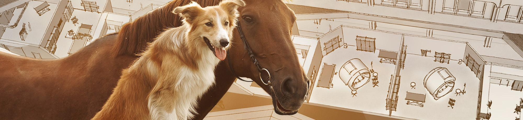 Horse and dog in front of sketches of veterinary medical center